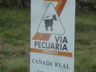 Ruta de los Castaños, Rozas de Puerto Real;excursiones en grupo senderismo de montaña rutas de sen
